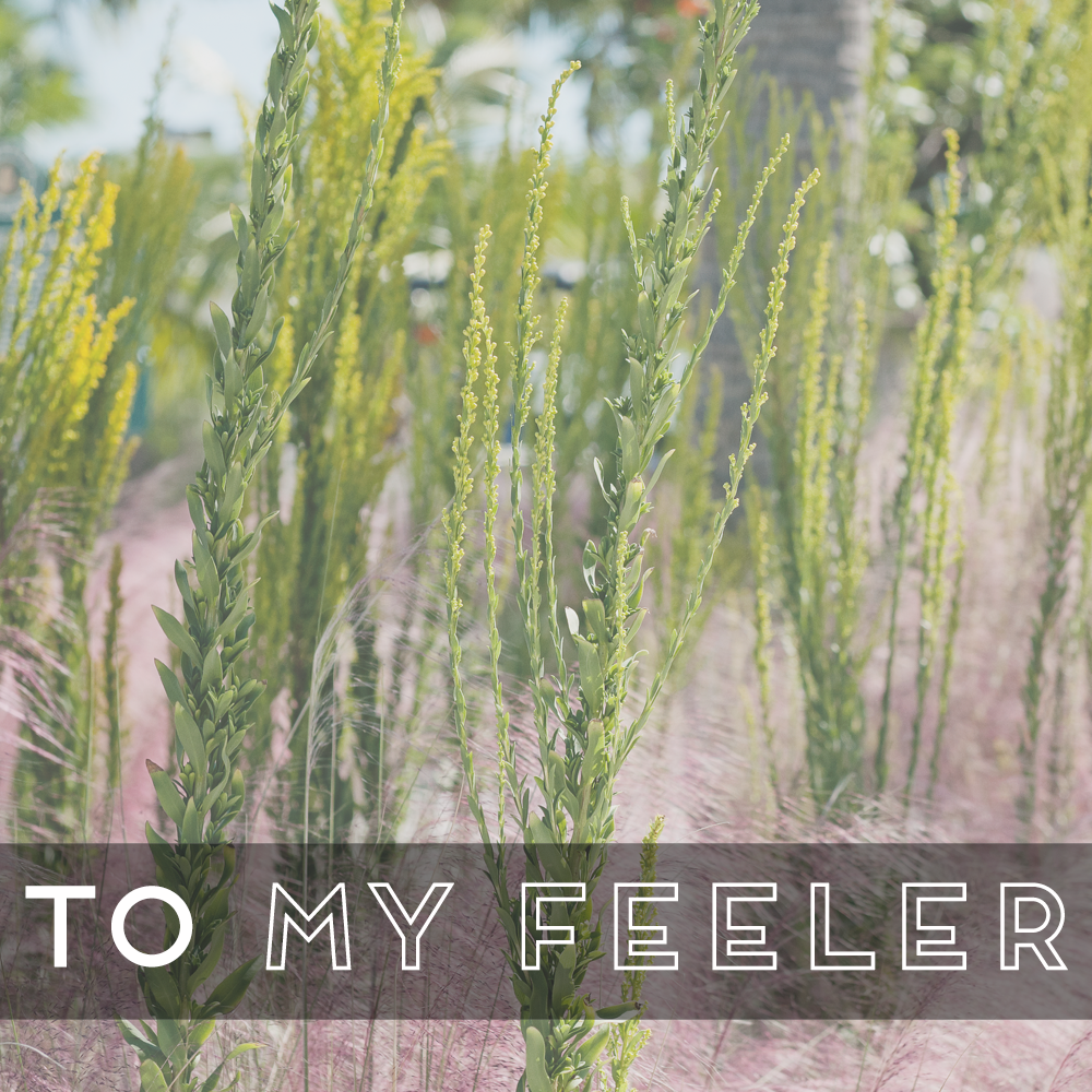 31 Days of Open Letters: A Blog Series at SarahSandel.com // An Open Letter to My Feeler