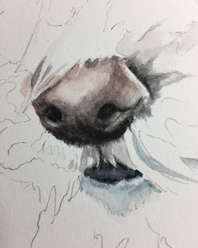 Guess what I am painting? #dogs #doggie noses #petportraits #watercolorpaintings#watercolors