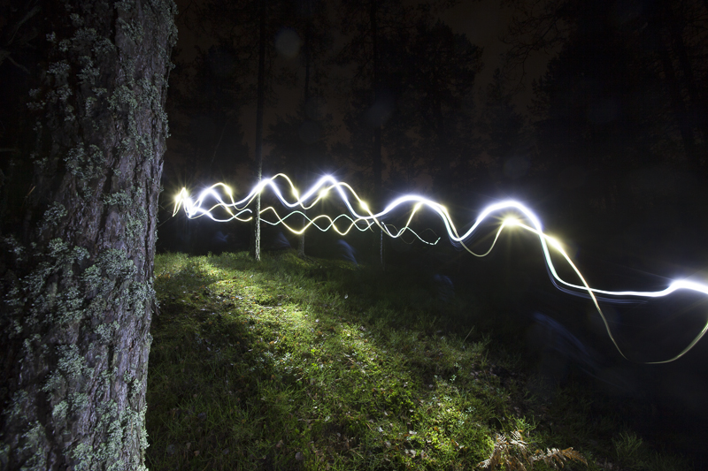 NTR_skog.jpg
