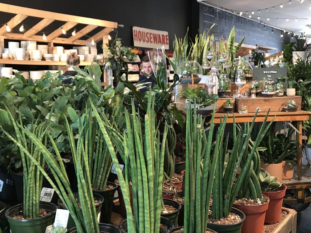 visit-plant-shop-calgary-plants