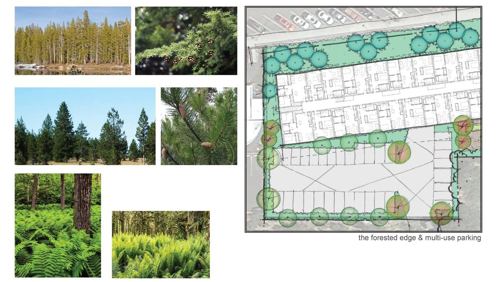 LIHI-Fazio Revisedlandscape concept 4.jpg