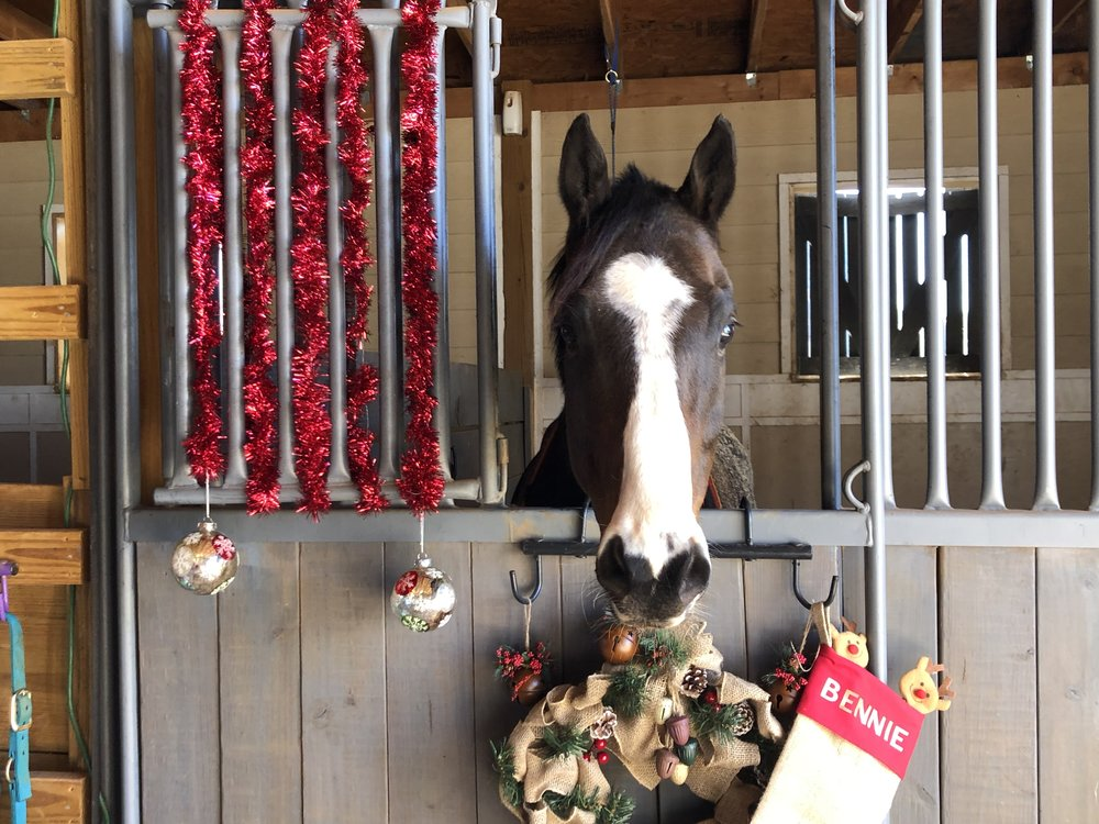 Bennie on Christmas.jpg