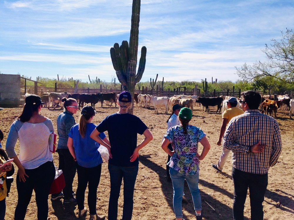 Merrill SImpson and team prepare to work a head of cattle in Mexico