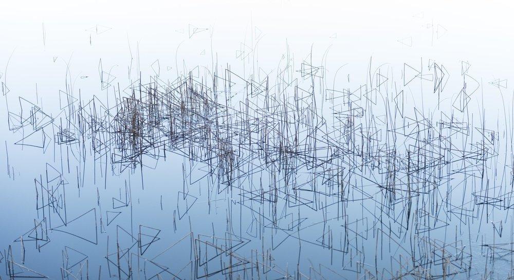 reeds+2+301.jpg