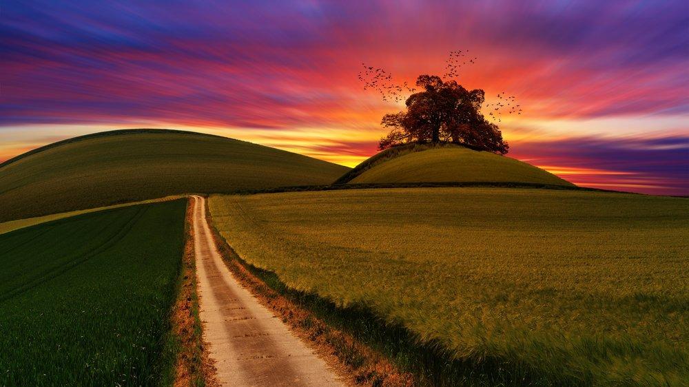 Sunrise path.jpg