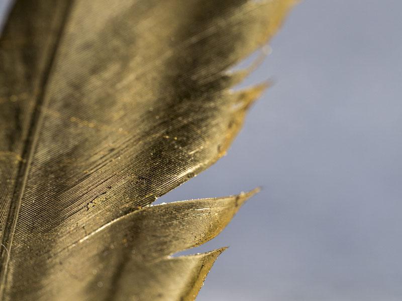 Vogelfeder, Kölnerglanzvergoldung