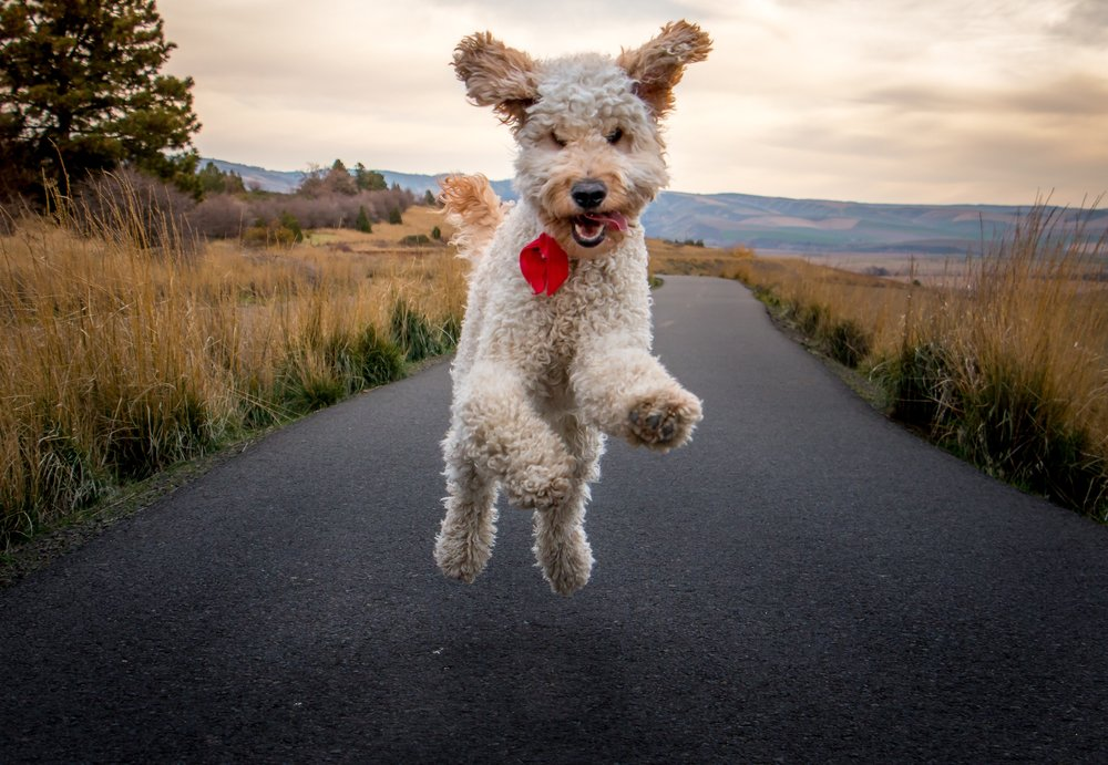 """This image of my dog """"Oliver"""" would not capture his personality and playfulness if taken from above."""