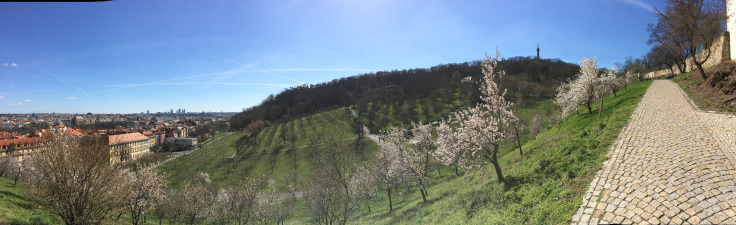 petrin-hill-garden-pano-of-hill-and-trees.jpg