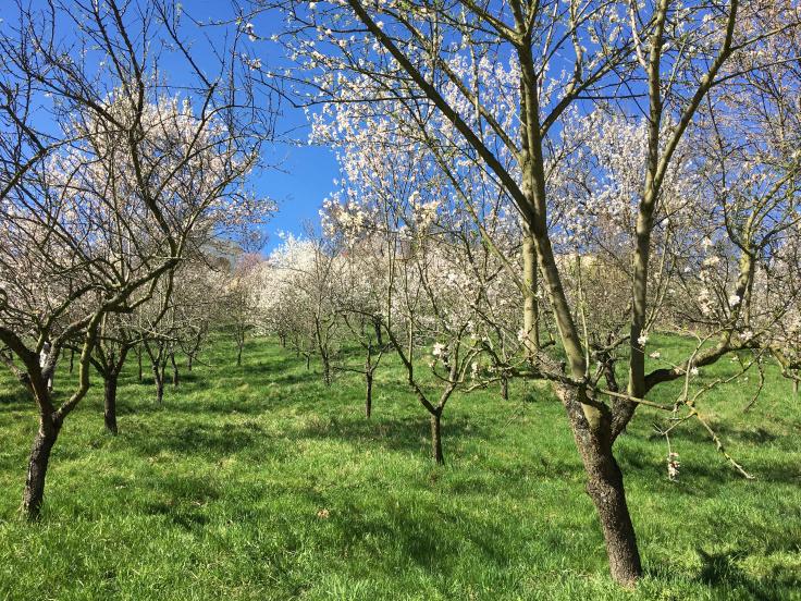 petrin-hill-garden-blossom-trees-view.jpg