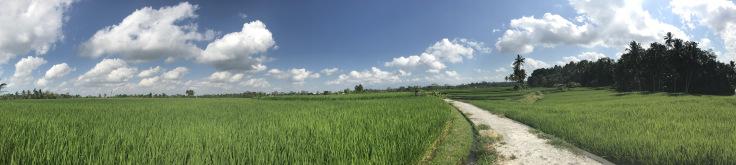 rice-paddie-pano.jpg