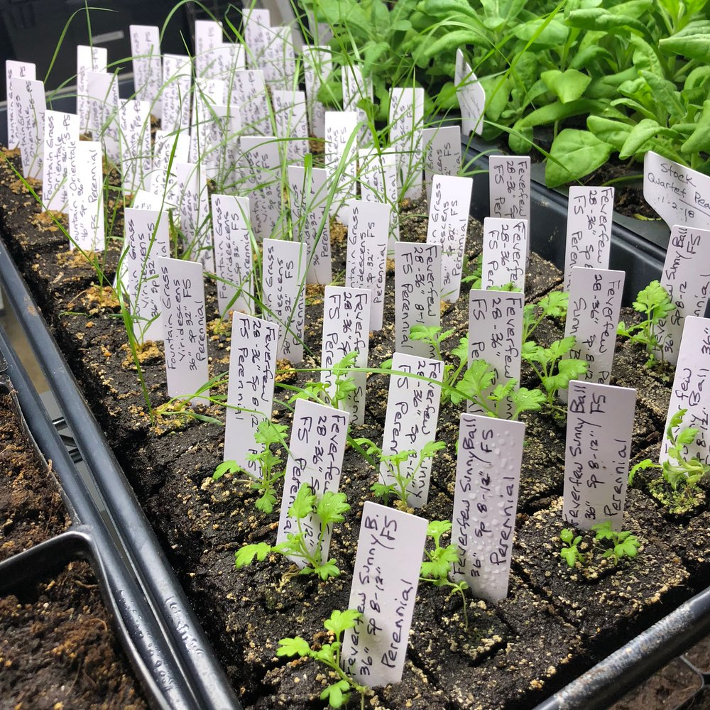 GrowRoom4.jpg