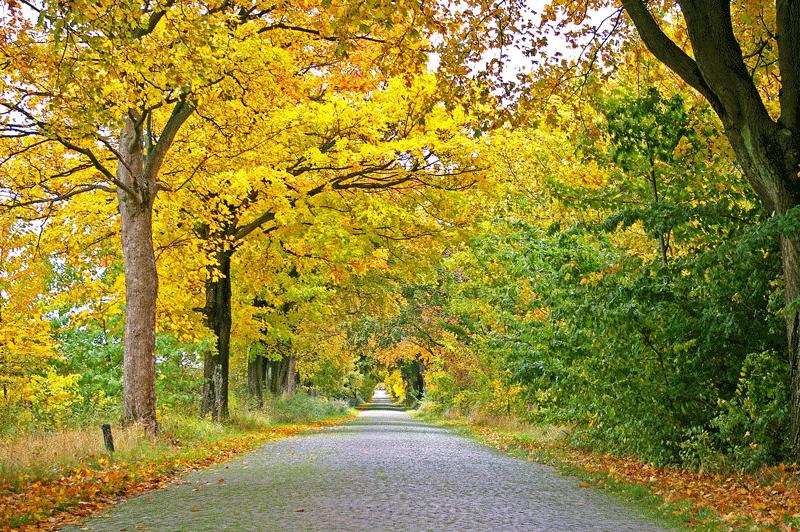 autumn-1010358_1920SEO.png