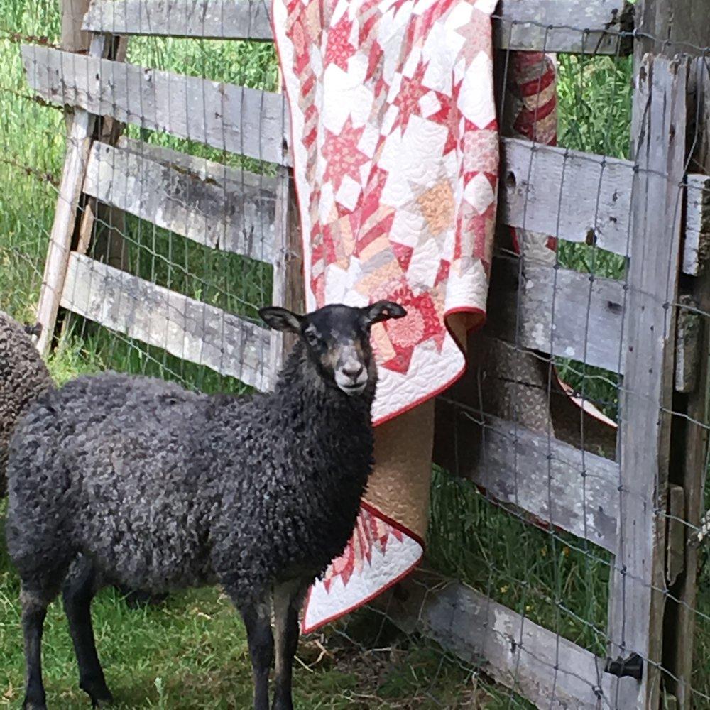 Gotland lamb - Rosemary