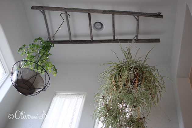 hanging plants from reclaimed ladder