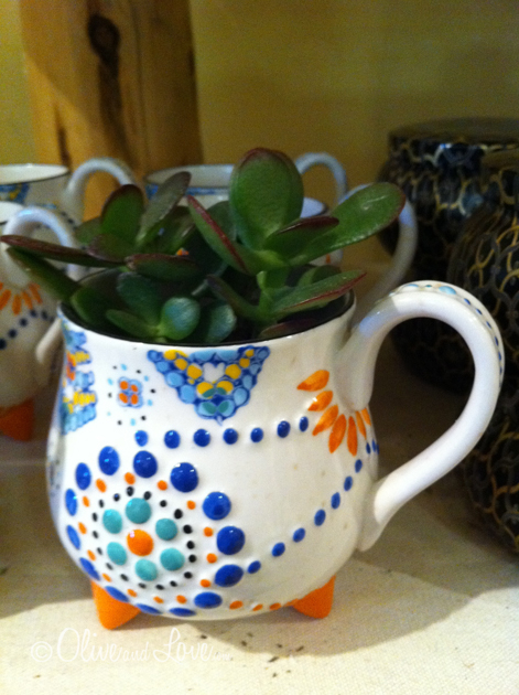 jade plant in cup anthropologie