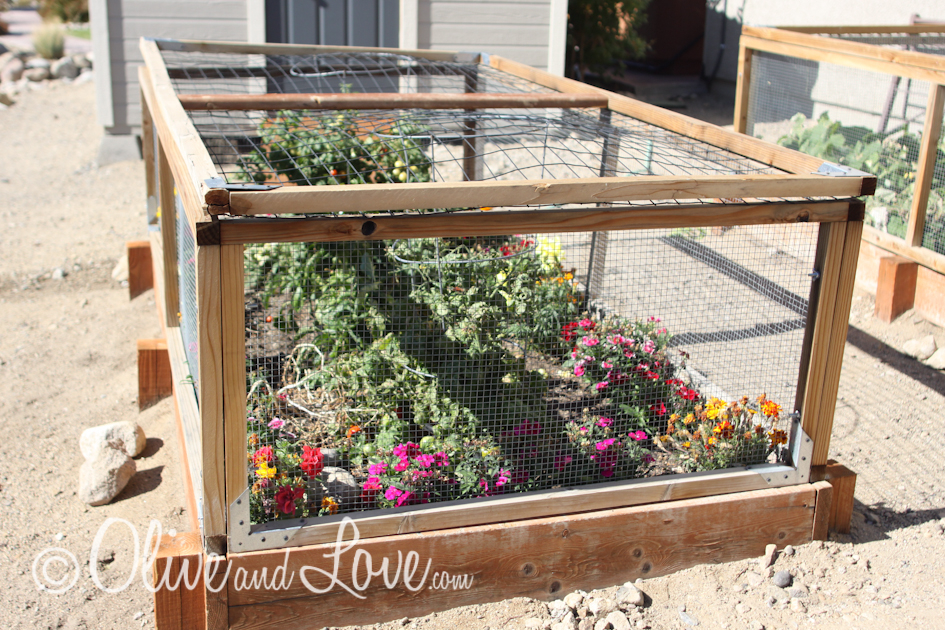 raised vegetable garden with rabbit and deer proof top