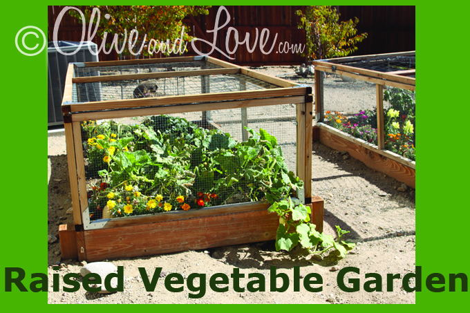 raised vegetable garden with top
