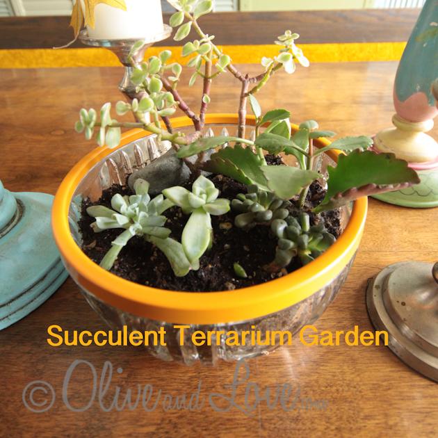 Succulent Terrarium Garden DIY