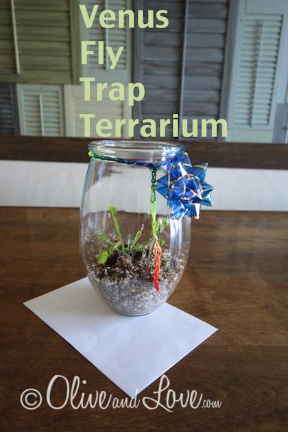 DIY venus fly trap terrarium