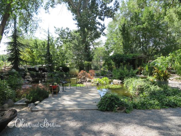 Sierra water gardens Reno Nevada pond specialists