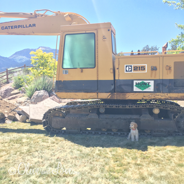 Excavator, backyard construction, putting in a pool, labradoodle