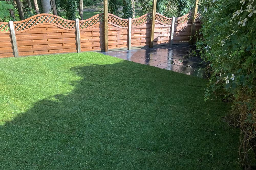 Grass-003.jpg