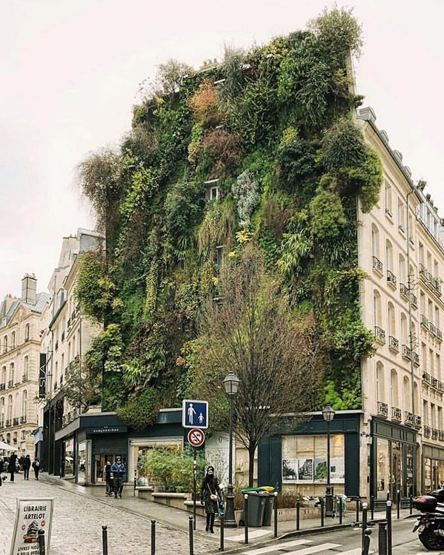 I wonder if we could do this to the outside of our building 🧐. Patrick's Blanc's vertical garden in Paris. 🌱 📸@haarkon_