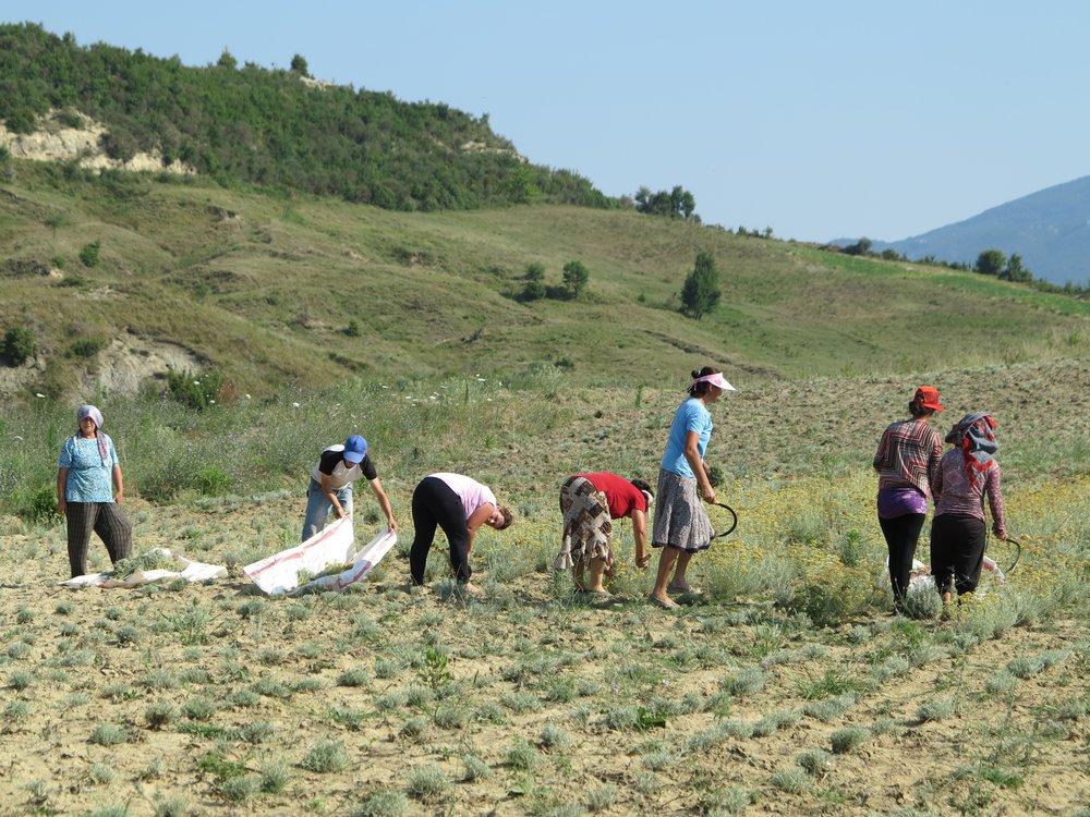 albania her farmers.JPG