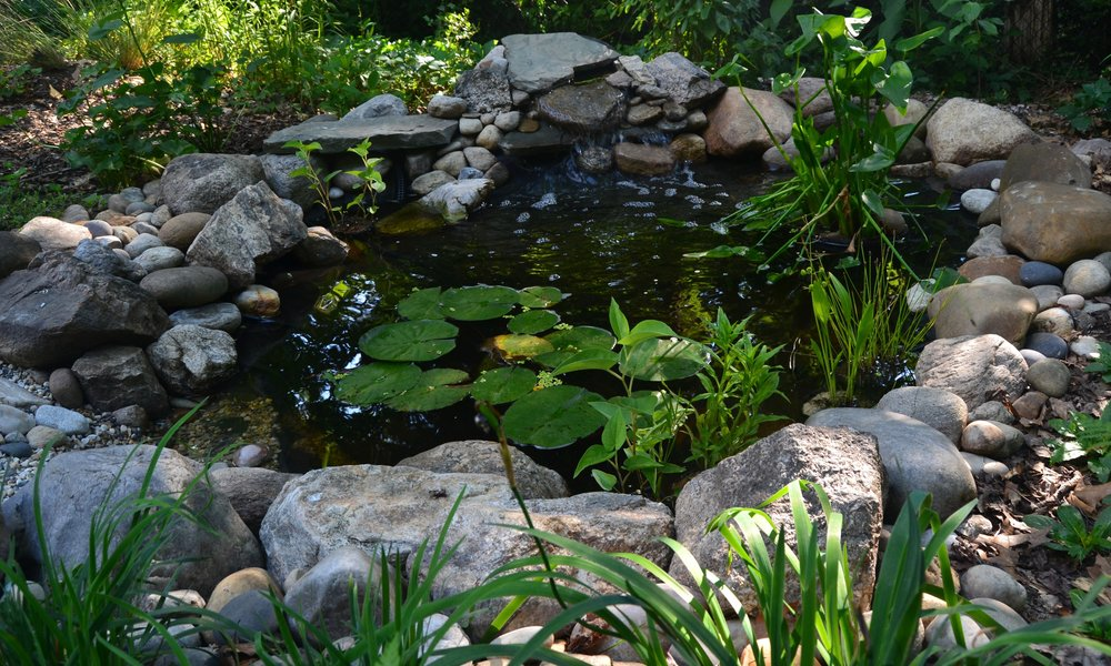 Wildlife Pond - A pond planted with native aquatic and pondside plants attracts and supports wildlife in all seasons.