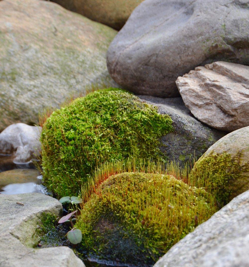 Moss on rocks2.jpg