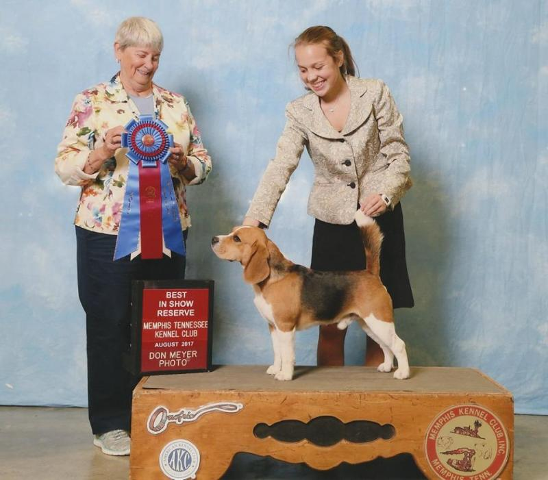 Thank you to Judge Anne Katona for awarding Drake with Reserve Best in Show, to beagle-breeder Judge Dana Cline for awarding him a Hound Group first place, and to beagle-breeder Judge Jane Snider for selecting him in the breed ring.