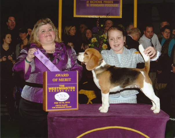 """Tipper is the 2010 Westminster is the 1st Award of Merit Winner in 15"""" beagles! Thank you to breeder judge Ms. Patricia Keenan."""