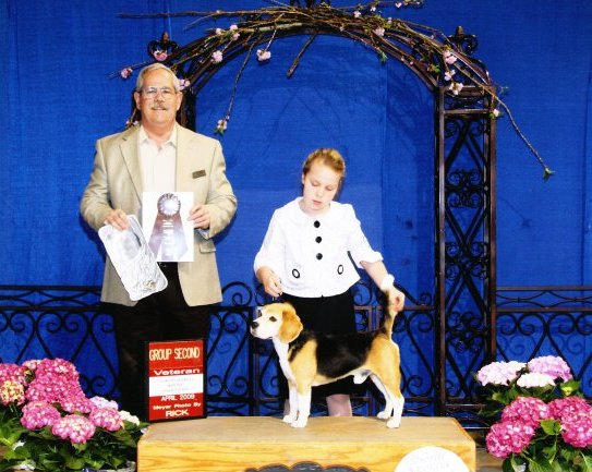 """AKC CH and UKC BIS RBIS CCH Aggie's Leegle Beagle """"Beagle"""" (RIP)   AKC Group Placing  Breeder: Gilbert Ahlhardt  """"Beagle"""" won multiple UKC Best in Show and Reserve Best in Show awards. He earned his AKC championship at 18 months. His first major, 3 points, was won at 7 months going BV over specials. Two 4-point majors followed on his path to champion. He also earned his UCI International Championship."""