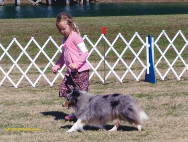"""RodNStaff Love Lives On """"Memory""""  (RIP)   AKC Major pointed  Breeder: Streetie Hutchinson and Bill Widdop  """"Memmie"""", as she was affectionately known, was Mary's first show dog."""