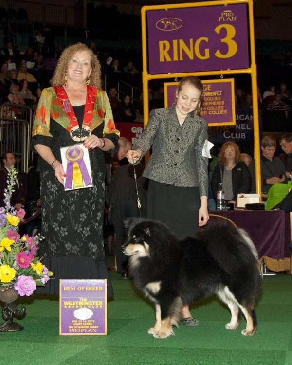 Canadian BIS GCh. and American GCh. Sugarok Born in the USA   Breeder/Owner: Linda Marden   2012 Westminster Kennel Club Best of Breed