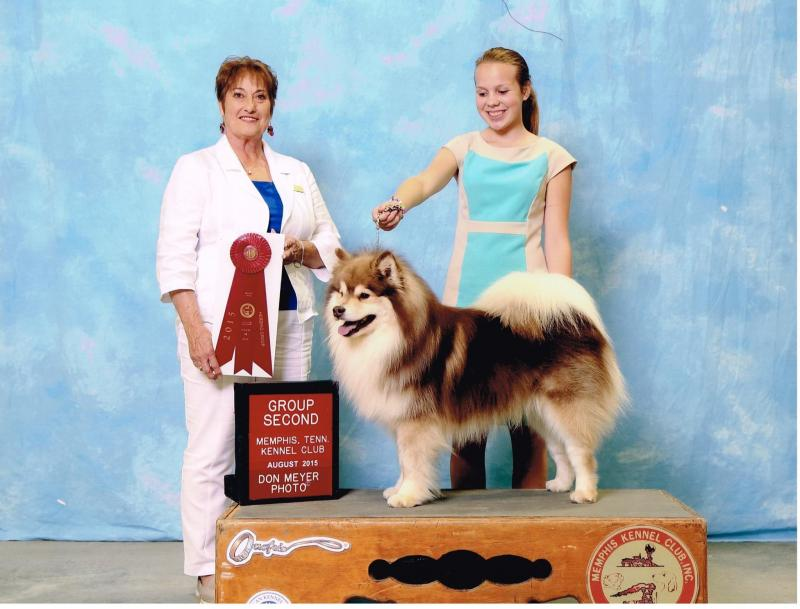 GCh. Lapinlumon Xukulaku   Breeder: Sarah Brandes , Owners: LInda Marden and Mary Lee