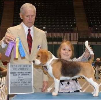"""AKC CH and UKC CCH Irish Coffey Black Velvet Band """"Ribbon""""   Breeders/Owners: Bob and Pat Coffey, Co-owner: Mary Lee  Ribbon is shown going BV over specials in May 2007 for her first major under Judge Joe Gregory."""