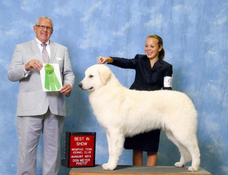 Ch. Talizman Pull the Perfect Pint CGC CPA  Multi Owner Handler Series Best in Show winner  Breeders: Mary Lee, Kathy Knapp, Gene Hayes, Lynn Brady, and Connie Townsend  Owners: Kathy Knapp, Gene Hayes, and Mary Lee  Mary and Guinness won many working group placements, and owner handler series best in shows.