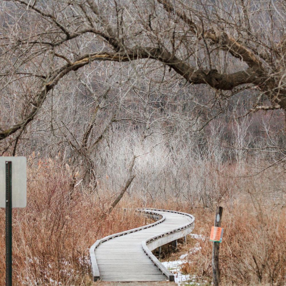 Appalachain Trail-7106.jpg