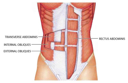 abdominal-muscles-diagram.jpg