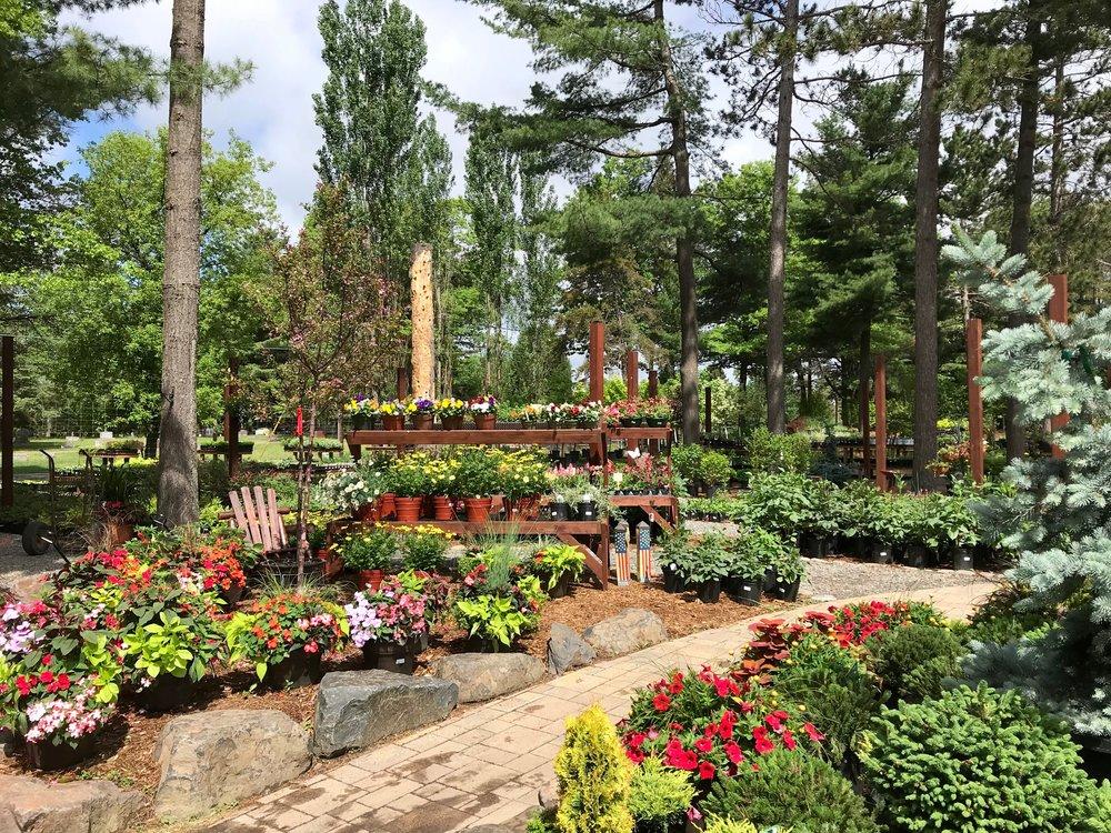 Our zone 3B Retail Perennial Gardens