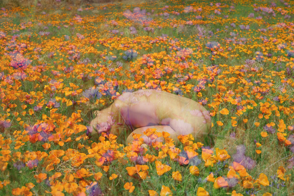 helena flower 2 DSC00811.jpg