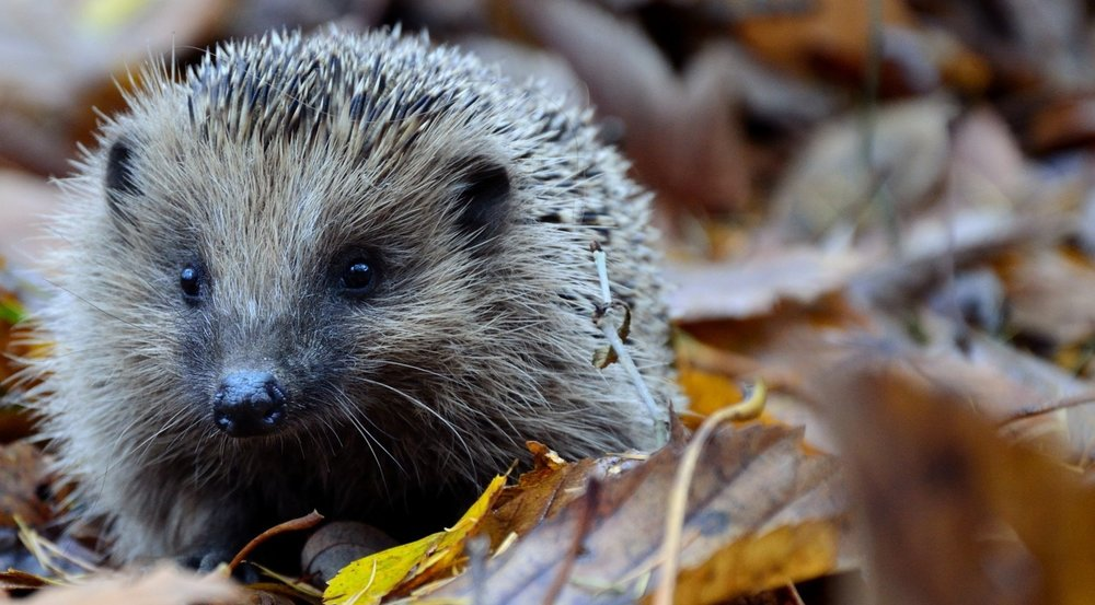 Can I point you in the right direction? - - Pete Quill, Technical Support Hedgehog