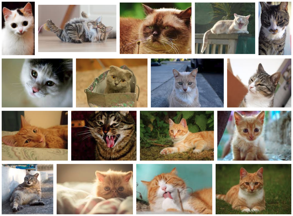 3_cats.png