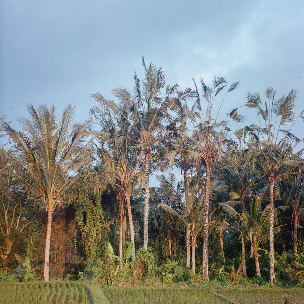 A forest where I usually play with my friend when I was a kid at Tunjuk Village, Bali, Indonesia.