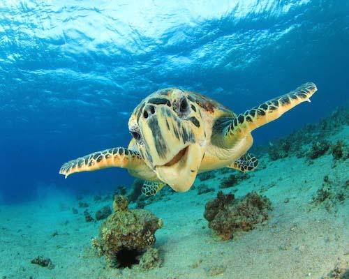 costa rica turtles tortuguero a2d travel inspiration.jpg