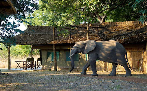 goliath safari camp zimbabwe a2d travel concierge.jpg
