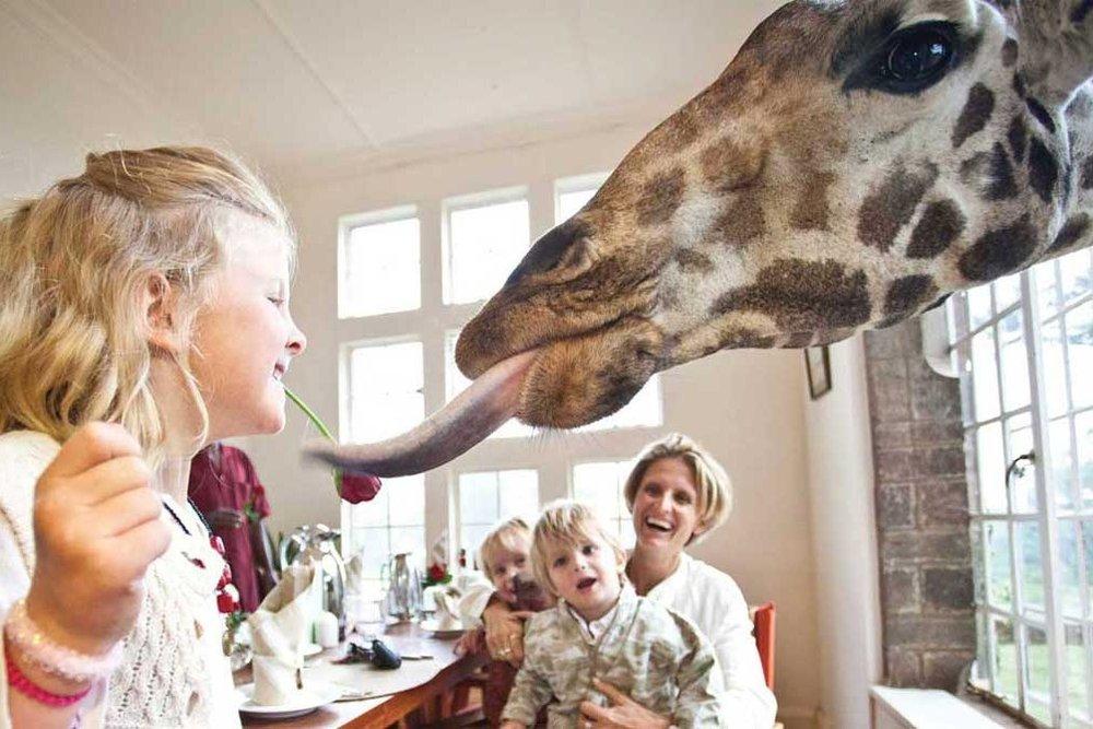 famiily-holiday-safari-a2d-giraffe-manor-africa.jpg