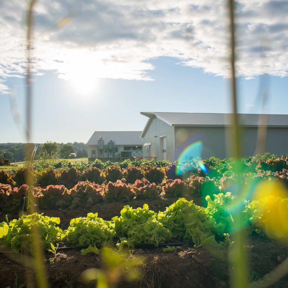 Arethusa Farm Gardens Sunrise