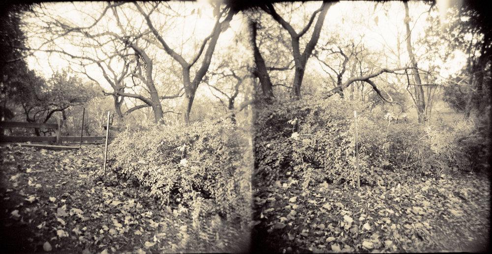 Landscape of Memory : lom 055   bleached silver print, framed  23 x 12cm, 1998